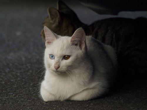 091031cats1.jpg