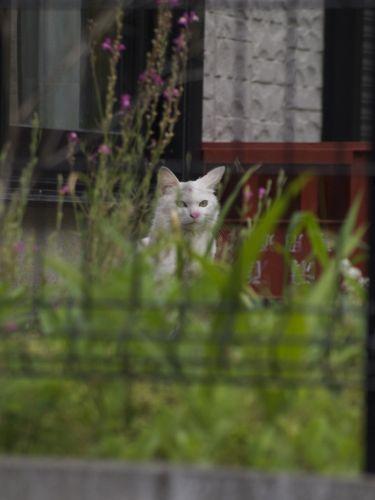 cat12061.jpg