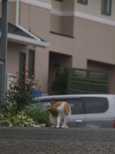 cat12063.jpg