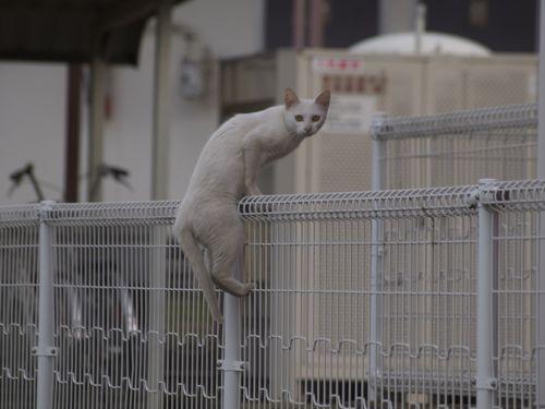 cat12065.jpg
