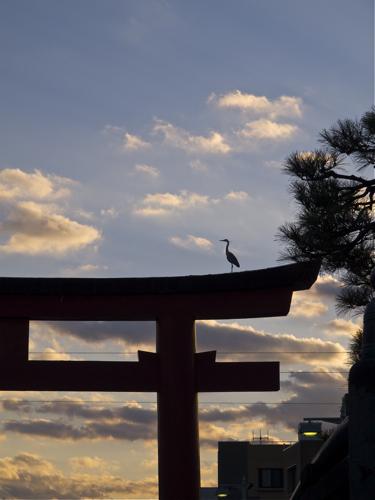 100124sky&bird1.jpg